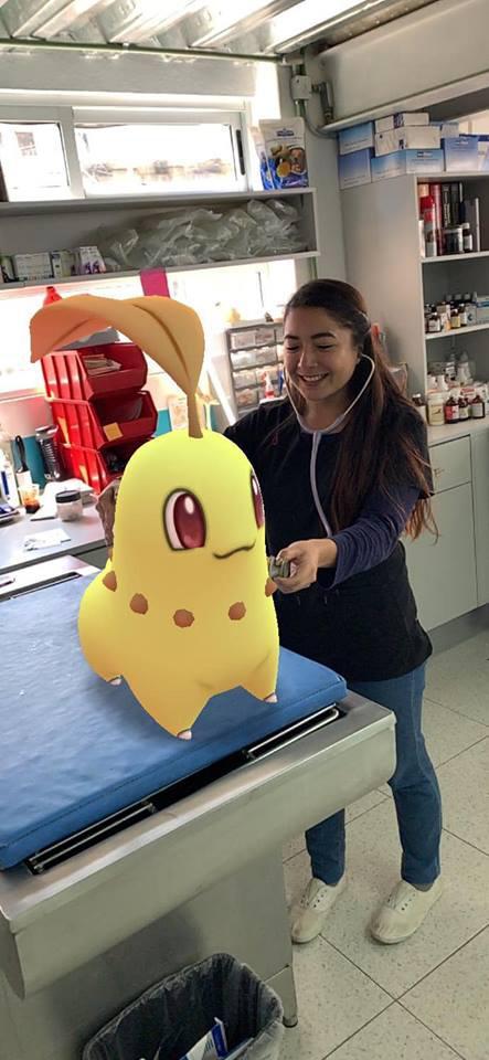 Tierarzt Pokemon GO Endivie